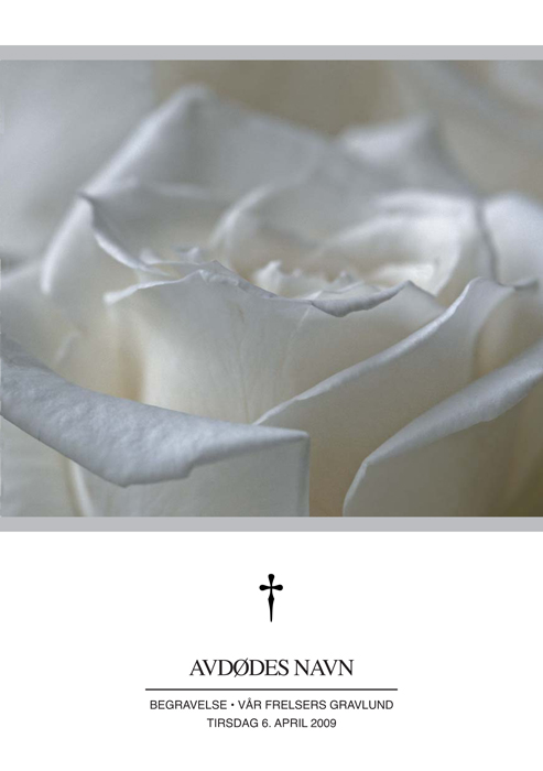 Standard 506 Hvit rose